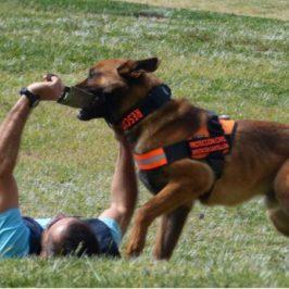 La Unidad Canina de Búsqueda y Rescate de Castellón elige Benicàssim para sus entrenamientos