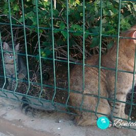 PRO GAT Benicàssim, asociación por un Benicàssim amigo de los animales