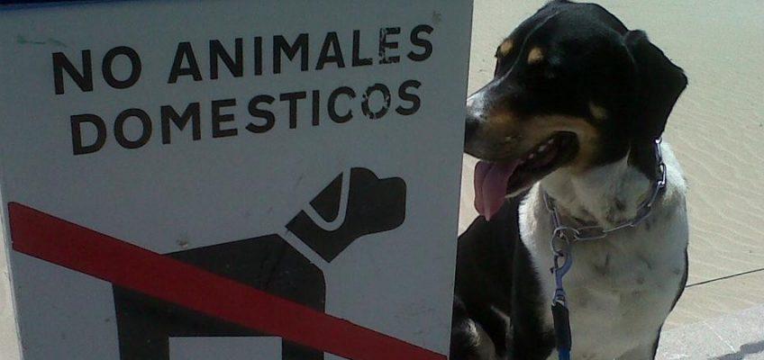 Cartel prohibido animales domésticos
